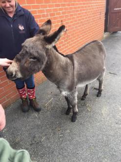 donkey 4