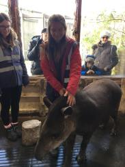 tapirrr
